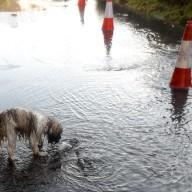 floods close up sc 1