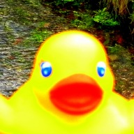 cor-luv-a-duck-race-28th-march-2015-58.jpg