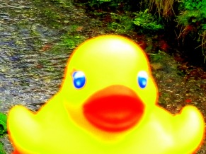 cor-luv-a-duck-race-28th-march-2015-58.jpg